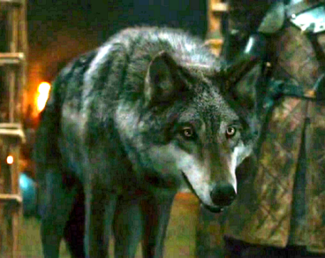 Robb's direwolf, Grey Wind